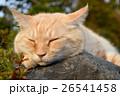 お昼寝中の猫 26541458