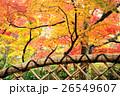 箱根美術館 紅葉 秋の写真 26549607