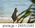 南国への旅行 ビーチ 26551583