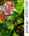 新緑の候 (50) 26557280