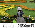 菊 キク 菊の花 26560043