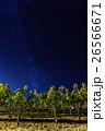 フルーツ 果物 果実の写真 26566671