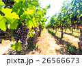 フルーツ 果物 果実の写真 26566673