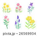 水彩 花 植物のイラスト 26569934