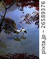 鶴 丹頂鶴 秋の写真 26589376