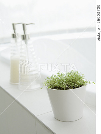 バスルームの観葉植物 26603709