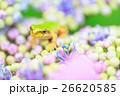 雨イメージ_アジサイとアマガエル 26620585