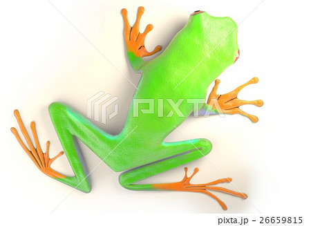 red eyed tree frog from tropical rainforest ofのイラスト素材