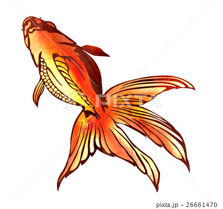 2136f638d2 魚イラストのイラスト素材 pixta jpg 450x423 切り絵 フリー 素材 琉金 金魚 絵