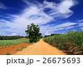 南大東島の風景 26675693
