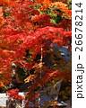 紅葉 永源寺 寺院の写真 26678214