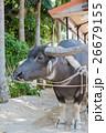 水牛車 26679155