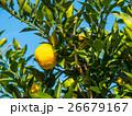 柚子 26679167