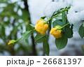 植物 雪 冬の写真 26681397
