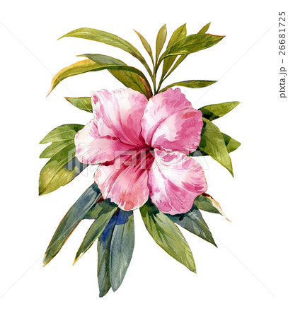 watercolor painting of leaves and flowerのイラスト素材 [26681725] - PIXTA