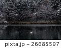 白鳥 26685597
