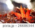 落葉になったフウの紅葉 26686344
