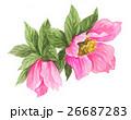 花 クリスマスローズ 水彩のイラスト 26687283
