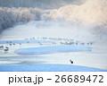タンチョウ 冬 北海道の写真 26689472