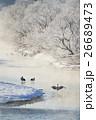 輝く樹氷と丹頂鶴 26689473