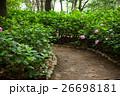植物 花 紫陽花の写真 26698181