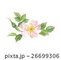 イヌバラ 花 ロサ・カニーナのイラスト 26699306