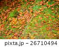 落葉 落ち葉 晩秋の写真 26710494