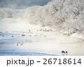 タンチョウ ツル 樹氷の写真 26718614