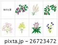 花 七草 風物詩のイラスト 26723472