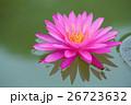 きれい 綺麗 花の写真 26723632