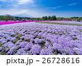 富士芝桜まつり 26728616