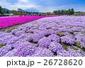 富士芝桜まつり 26728620