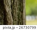木肌 樹皮 アップの写真 26730799
