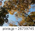 木々の紅葉 26739745