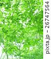 木漏れ日の空間/背景 26747564
