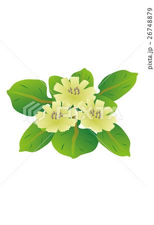 春の七草仏の座 26748879