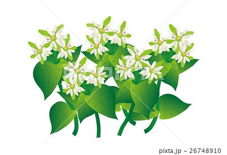 春の七草繁縷 26748910