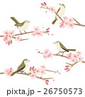 桜と鶯のイラストセット 26750573