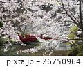 臥竜公園の桜 26750964
