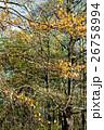 木 公園 アーバンの写真 26758994