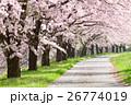 桜並木 26774019