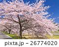 満開の桜並木道 26774020