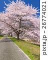 満開の桜並木道 26774021