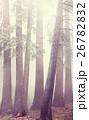 霧 森林 林の写真 26782832