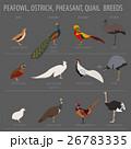 だちょう ダチョウ 駝鳥のイラスト 26783335