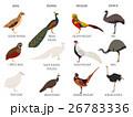 だちょう ダチョウ 駝鳥のイラスト 26783336