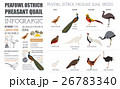 だちょう ダチョウ 駝鳥のイラスト 26783340