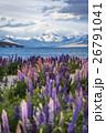 ニュージーランドのテカポ湖と満開のルピナス 26791041