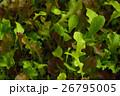 ベビーリーフミックス 野菜 26795005