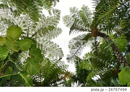 ジャングル 26797499